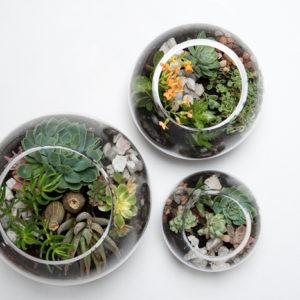Plants and Terrariums